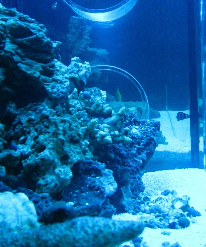 55 gallons saltwater fish tank (mostly fish, little/no live coral) - side view