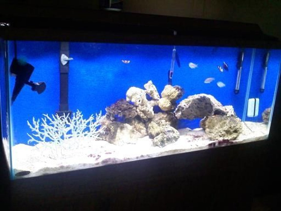 55 gallons saltwater fish tank (mostly fish, little/no live coral) - switched my fresh water tank to salt