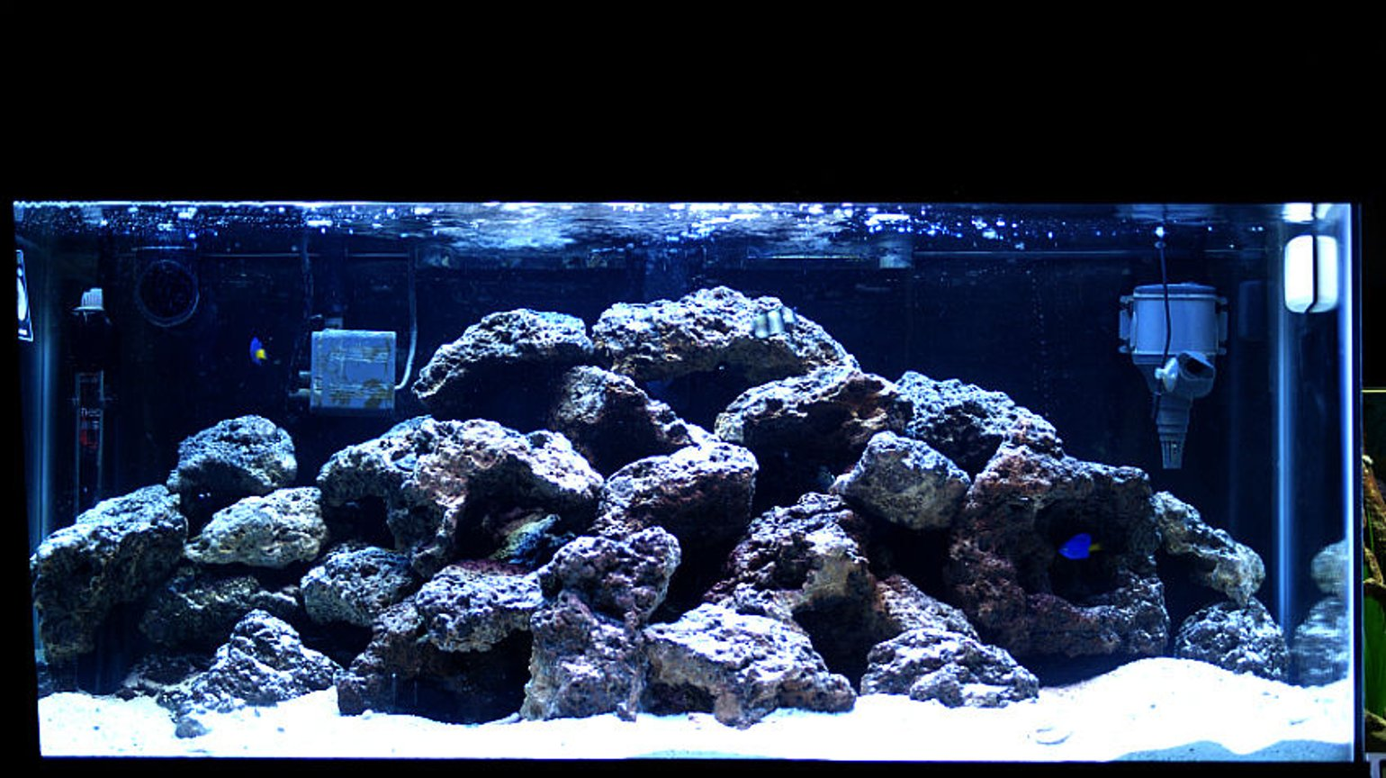 50 gallons saltwater fish tank (mostly fish, little/no live coral) - damsels and 70 pounds of live rock, 50 gallon. Enjoy!