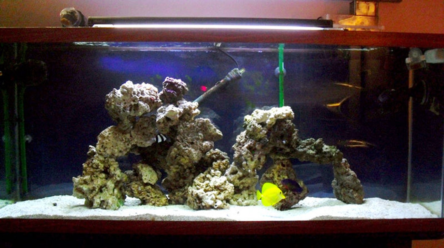 55 gallons saltwater fish tank (mostly fish, little/no live coral) - 55 gallon saltwater aquarium