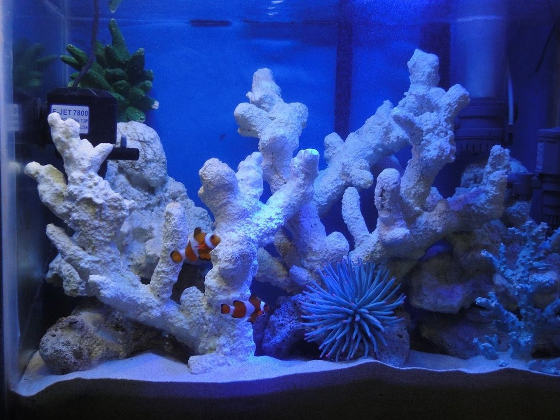 20 gallons saltwater fish tank (mostly fish, little/no live coral) - My 20 Gallon saltwater fish only tank with artificial rocks