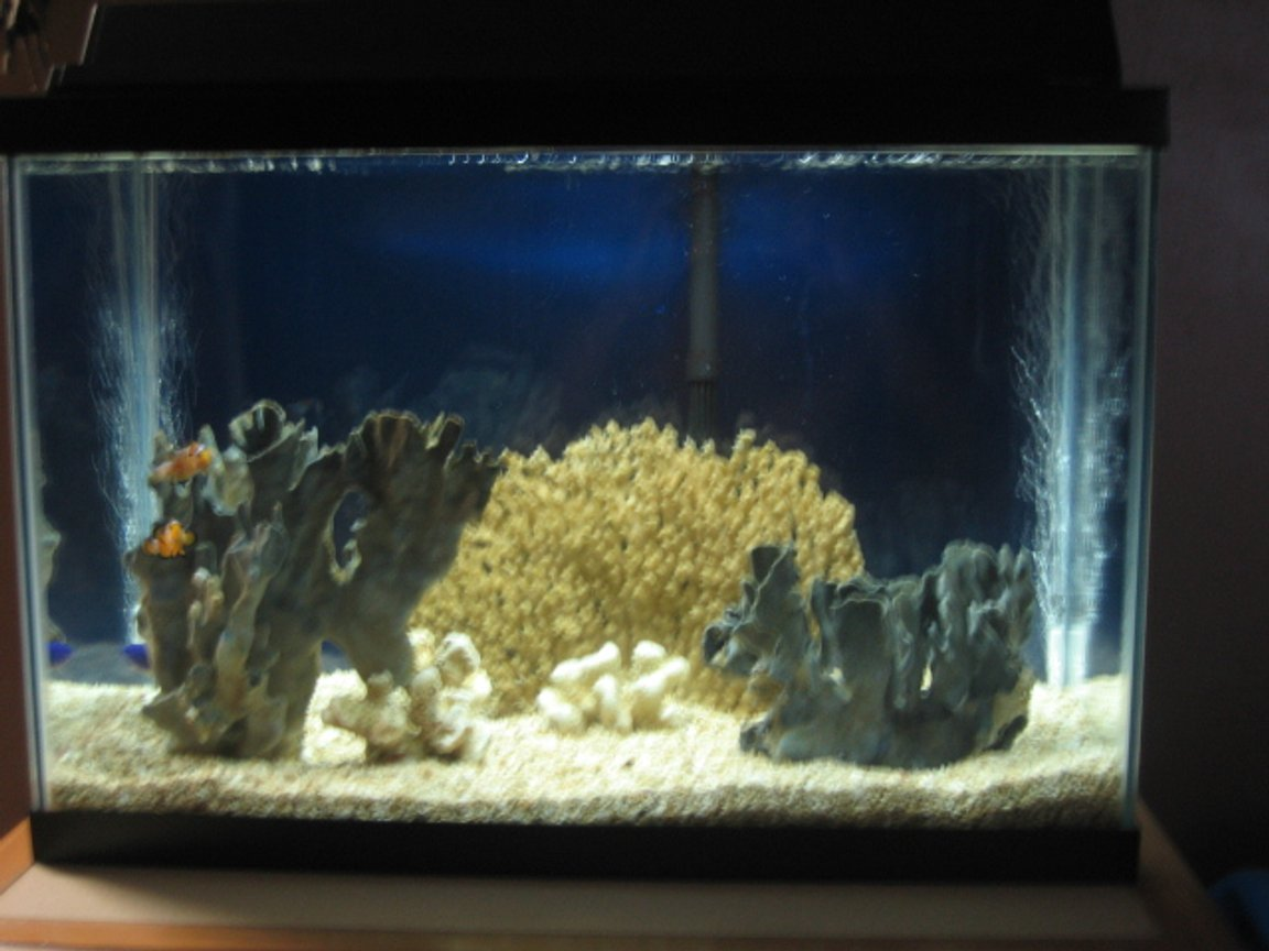 "20 gallons saltwater fish tank (mostly fish, little/no live coral) - My ""Stress Reliever Tank."" Placed in my bedroom so I can fall asleep looking at it. I had this tank up for a about a year and a half with the original fishes still going strong."