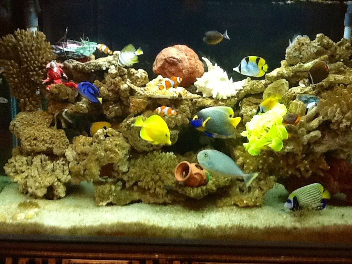 90 gallons saltwater fish tank (mostly fish, little/no live coral) - My seawater fish tank