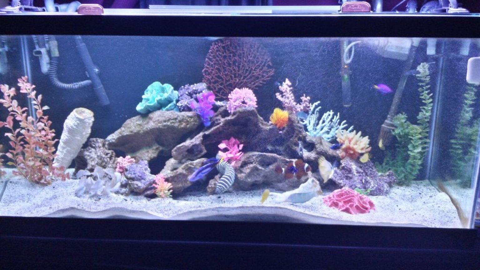 75 gallons saltwater fish tank (mostly fish, little/no live coral) - My 75 gallon fowler