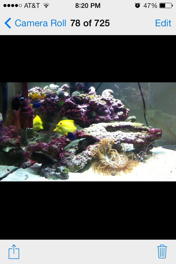 75 gallons saltwater fish tank (mostly fish, little/no live coral) - My salt water tank running two years an doing well may 57 gallon corner tank 100 pounds of Fiji live rock 2 clowns One yellow tang 3 damsals A very large long tenical And a angel fish that I don't know the name of A bunch of inverts chola te star fish More then I can name took me 3 mounths to build my self my true pride