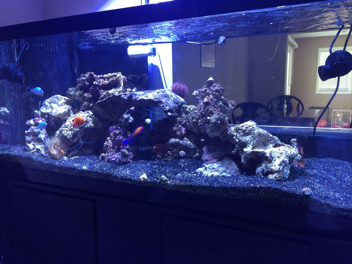 75 gallons saltwater fish tank (mostly fish, little/no live coral) - 75 gal FOWLR tank