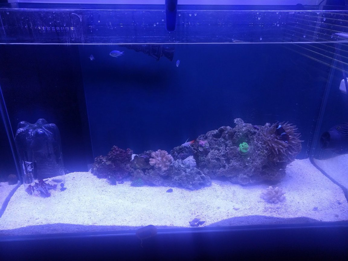 65 gallons saltwater fish tank (mostly fish, little/no live coral) - k