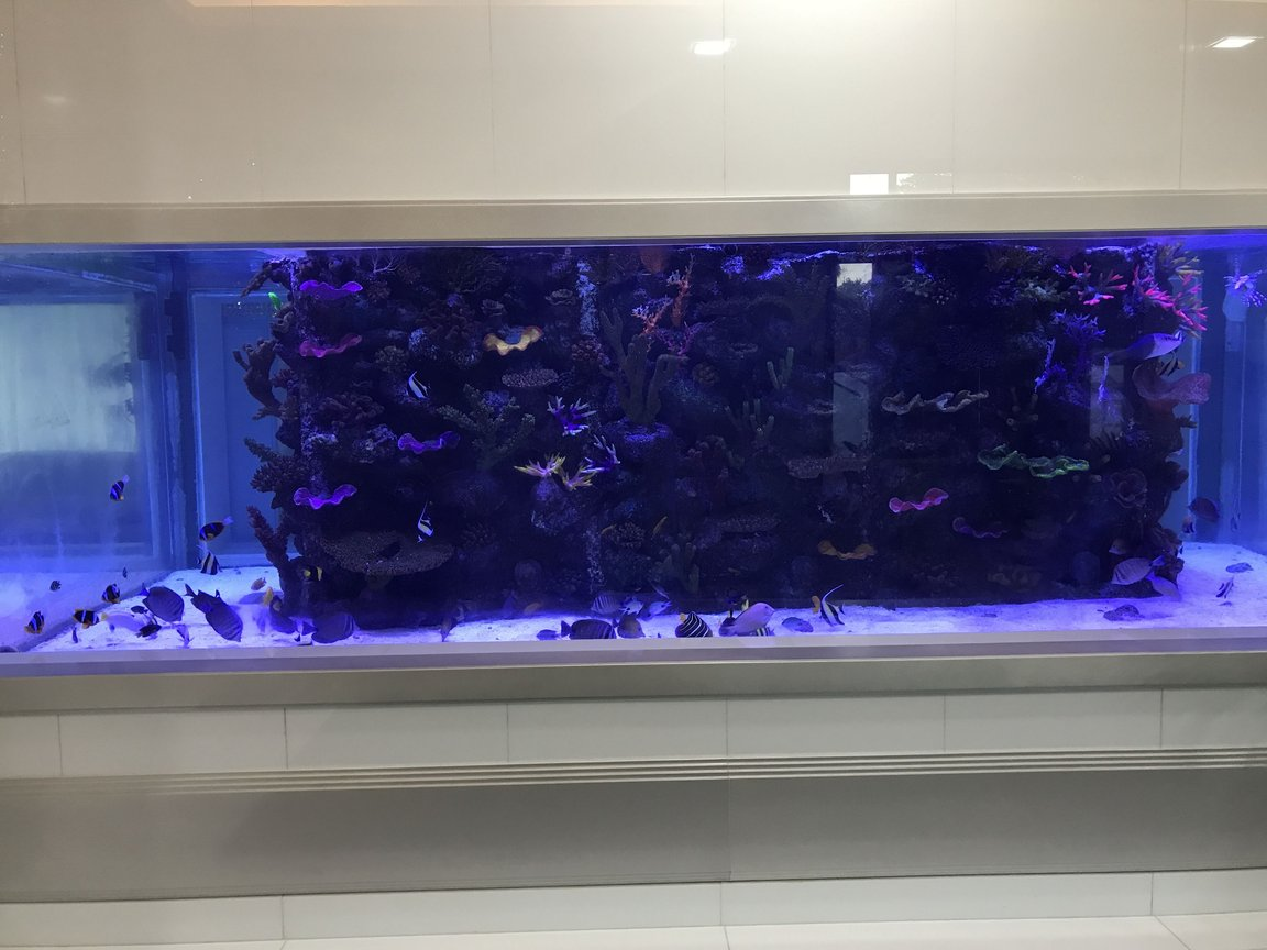 5000 gallons saltwater fish tank (mostly fish, little/no live coral) - 5000 gallon saltwater tank with artificial reef