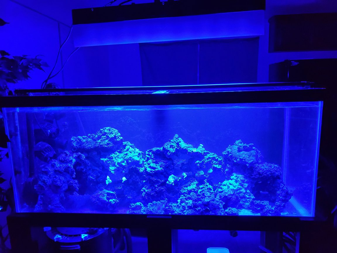 75 gallons saltwater fish tank (mostly fish, little/no live coral) - 6 Mos