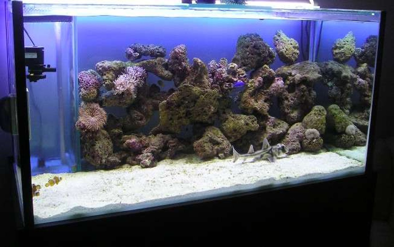 280 gallons saltwater fish tank (mostly fish, little/no live coral) - were did every one go??? newly introduced sharks will do that to fish