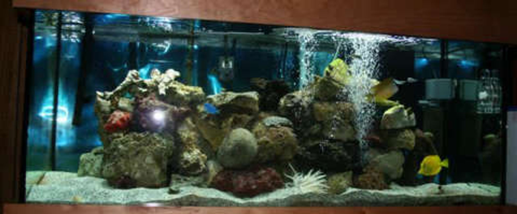 75 gallons saltwater fish tank (mostly fish, little/no live coral) - 75 gallon tank