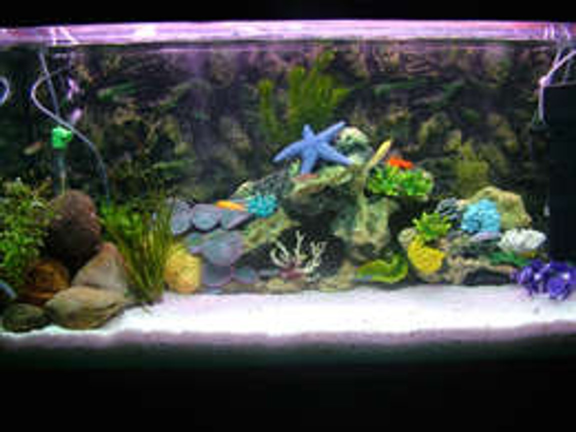 65 gallons saltwater fish tank (mostly fish, little/no live coral) - THIS IS A FRESH WATER TANK .. !!!!