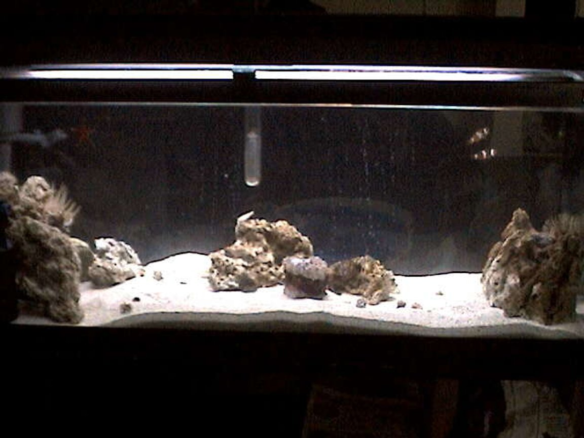 27 gallons saltwater fish tank (mostly fish, little/no live coral) - A general pic.