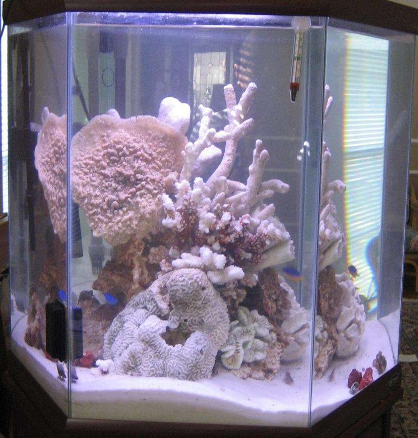 44 gallons saltwater fish tank (mostly fish, little/no live coral) - 44hex