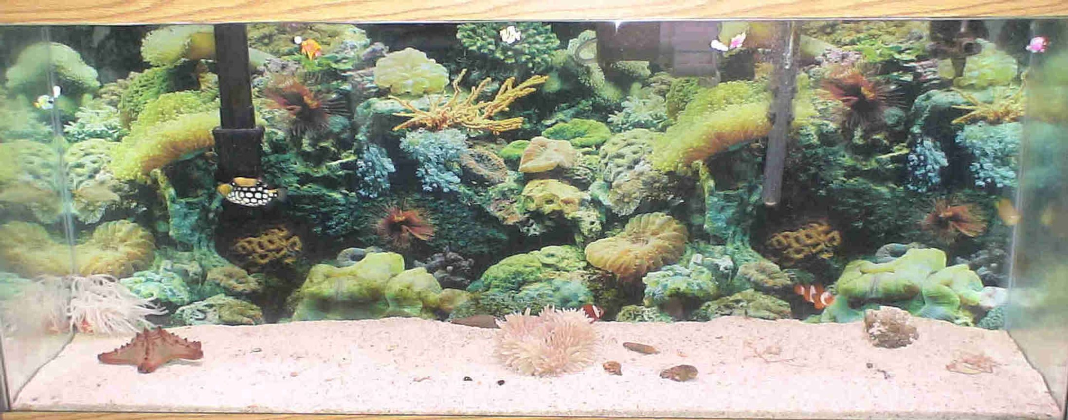55 gallons saltwater fish tank (mostly fish, little/no live coral) - 55 GALLON SALTWATER FISH TANK