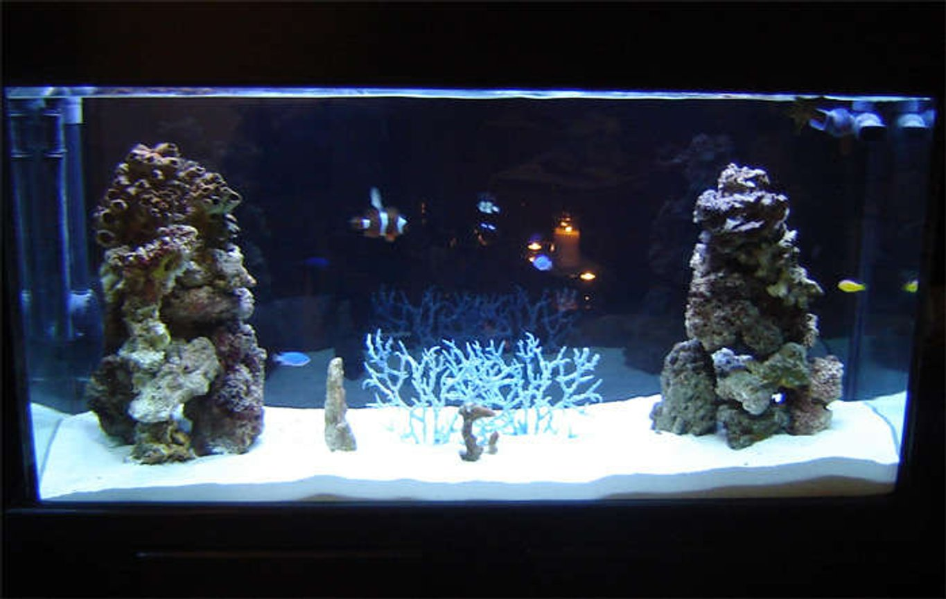 75 gallons saltwater fish tank (mostly fish, little/no live coral) - 75 Gallon - 2 weeks