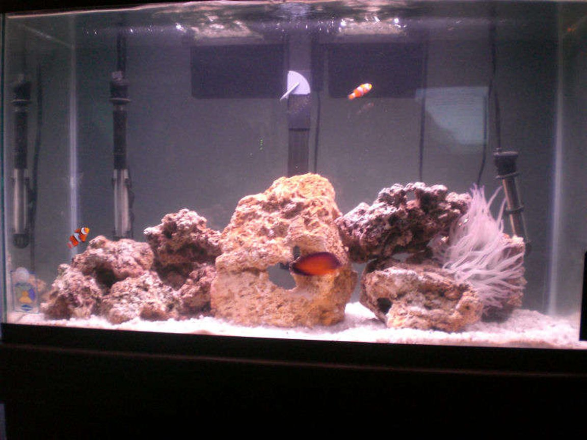 29 gallons saltwater fish tank (mostly fish, little/no live coral)