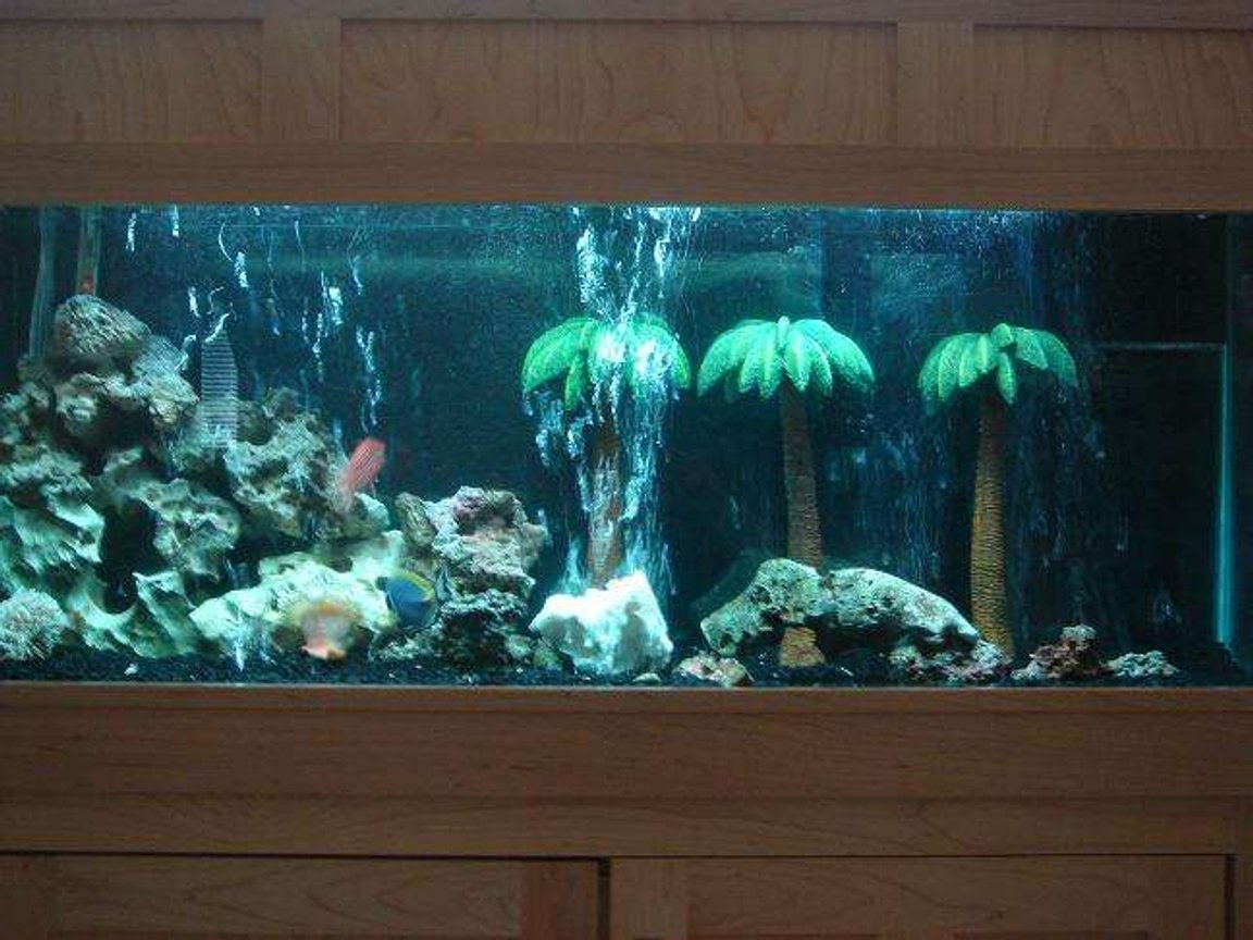 55 gallons saltwater fish tank (mostly fish, little/no live coral) - fish tank from a distance