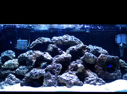 Rated #4: 50 Gallons Saltwater Fish Tank - damsels and 70 pounds of live rock, 50 gallon. Enjoy!