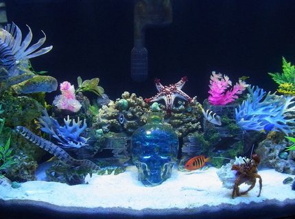 50 gallons saltwater fish tank (mostly fish, little/no live coral) - 50 gallon bowfront