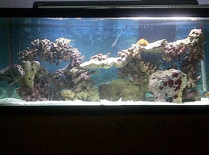 Rated #10: 75 Gallons Saltwater Fish Tank - 75 gallon