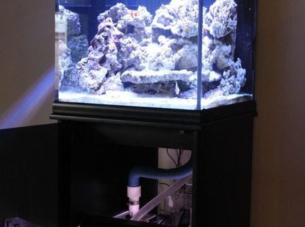 Rated #7: 35 Gallons Saltwater Fish Tank - front view