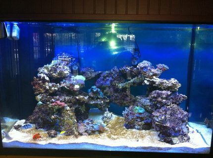 Rated #3: 10000 Gallons Saltwater Fish Tank - tank