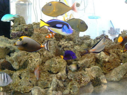 12 gallons saltwater fish tank (mostly fish, little/no live coral) - saltwater fish tank; no plants;