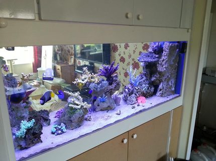 Rated #4: 130 Gallons Saltwater Fish Tank - New in wall tank, unfinished cabinet