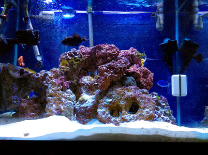 Rated #2: 55 Gallons Saltwater Fish Tank - My 55 Gallon Tank