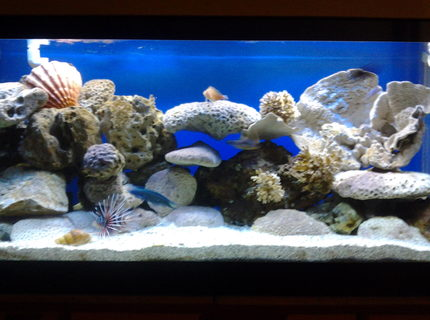 Rated #6: 90 Gallons Saltwater Fish Tank - 90 gal