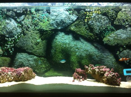 Rated #10: 10 Gallons Saltwater Fish Tank - My 10g wall-mounted aquarium