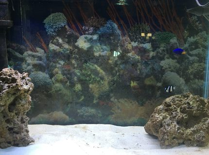 Rated #4: 29 Gallons Saltwater Fish Tank - Just the beginning