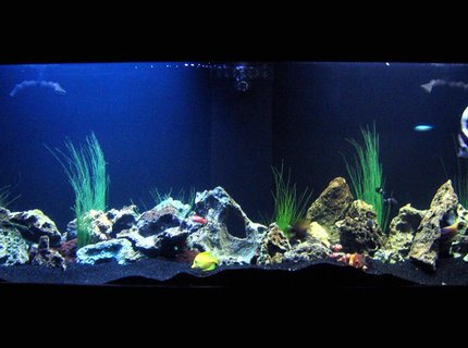 130 gallons saltwater fish tank (mostly fish, little/no live coral) - 130 gallon tank with Powder Blue Tang, Heniochus, Blue Tang, Yellow Tang, Sailfin Tang, Clown Fishes, Niger Trigger, Striped Damsels (avoid damsels - they're a pain!), Green Chromis, Green Serpent Star, Electric Blue Hermit Crab, Cleaner Shrimp, Lots of Hermit Crabs, and a Blue Lobster.