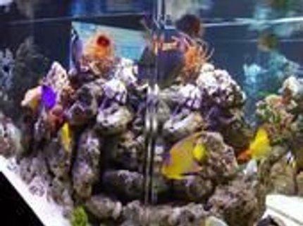 350 gallons saltwater fish tank (mostly fish, little/no live coral) - 350gal. sideview