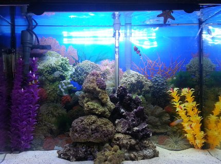 37 gallons saltwater fish tank (mostly fish, little/no live coral) - Marineland 37 gal and stand
