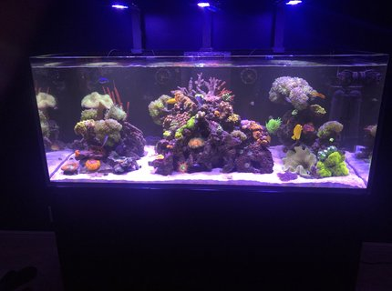 165 gallons saltwater fish tank (mostly fish, little/no live coral) - 10 leagues above