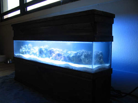 Cmc3502 39 s saltwater fish tanks photo id 11826 full for 10000 gallon fish tank