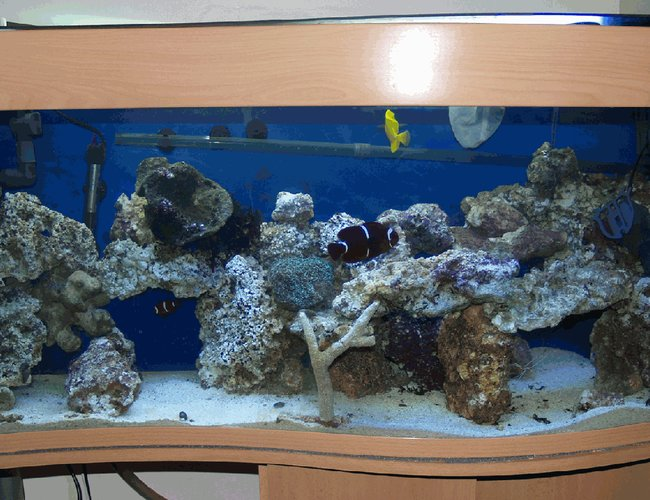 34 gallons saltwater fish tank (mostly fish, little/no live coral) - Full Tank View