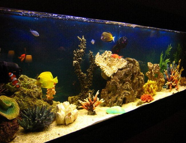 105 gallons saltwater fish tank (mostly fish, little/no live coral) - Fish only tank after 1 year