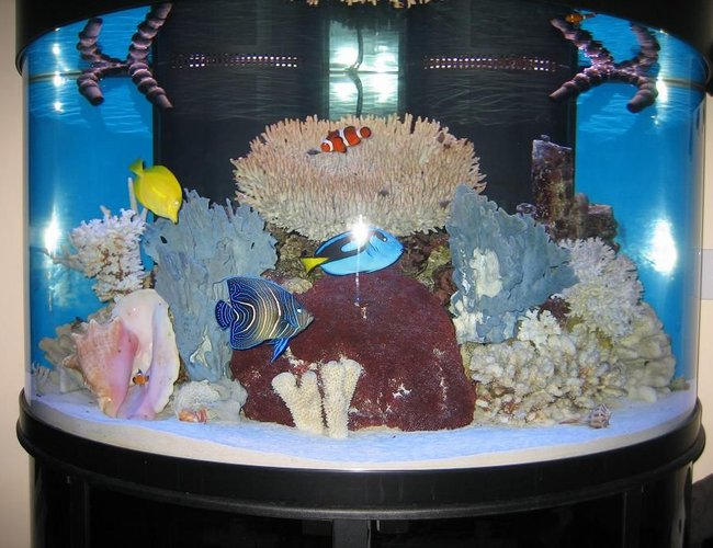 144 gallons saltwater fish tank (mostly fish, little/no live coral) - 144 gallon Oceanic half circle
