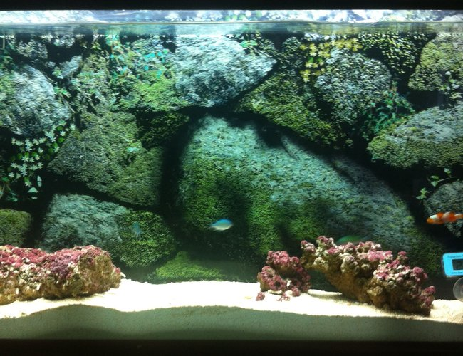 10 gallons saltwater fish tank (mostly fish, little/no live coral) - My 10g wall-mounted aquarium