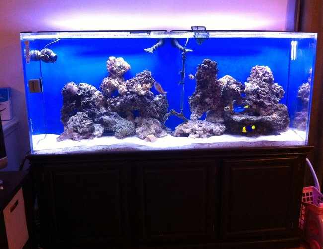 225 gallons saltwater fish tank (mostly fish, little/no live coral) - 225 gal saltwater fish tank one month 'old'