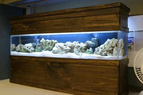 Rated #57: Saltwater Fish Tank - Updated photo of my DIY 5 gallon  tank