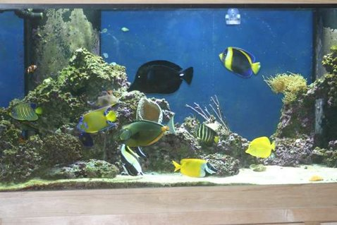 Rated #59: 210 Gallons Saltwater Fish Tank - 210 Gallon FOWLR