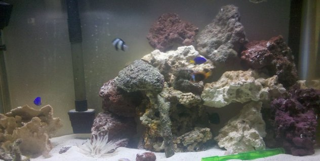 Rated #10: 29 Gallons Saltwater Fish Tank - Tank with new rocks