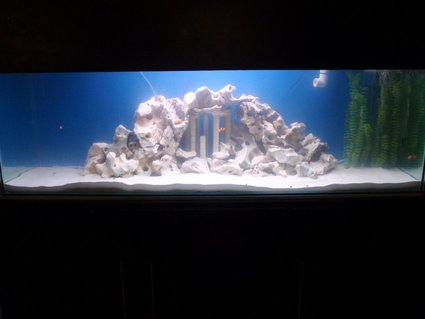 Rated #16: 140 Gallons Saltwater Fish Tank - Our monster tank. Enjoy!