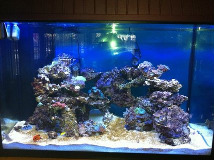 Rated #54: 10000 Gallons Saltwater Fish Tank - tank
