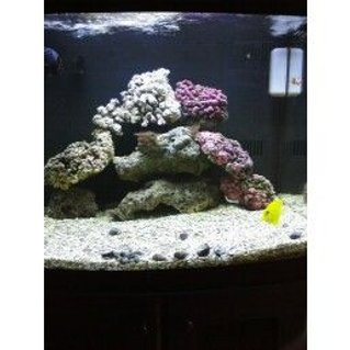 Rated #19: 29 Gallons Saltwater Fish Tank - new rock