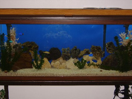 Rated #54: 55 Gallons Saltwater Fish Tank - my past time